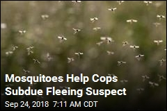 Mosquitoes Help Cops Subdue Fleeing Suspect