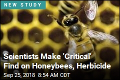 Latest Possible Victims of World's Most-Used Herbicide: Bees