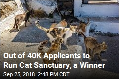 Out of 40K Applicants to Run Cat Sanctuary, a Winner