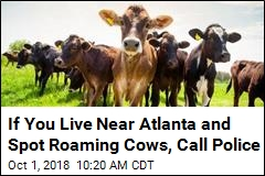 Dozens of Cows on the Loose After Georgia Truck Accident
