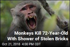 Monkeys Kill 72-Year-Old With Shower of Stolen Bricks