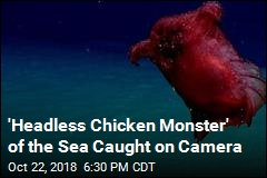 Meet The Deep Sea's 'Headless Chicken Monster'