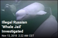 Illegal Russian 'Whale Jail' Investigated