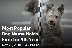 Most Popular Dog Name Holds Firm for 9th Year