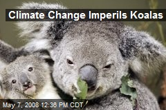 Climate Change Imperils Koalas