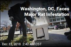 Washington, DC Faces With Major Rat Infestation