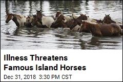 Illness Threatens Famous Island Horses