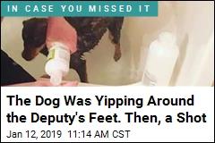 Deputy Loses Job for Shooting Barking Chihuahua