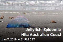 Thousands Stung as Jellyfish Invade Australian Coast