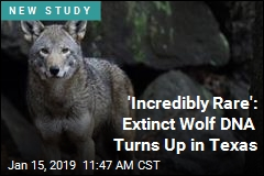 'Incredibly Rare': Extinct Wolf DNA Turns Up in Texas