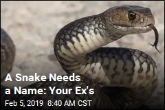 Think Your Ex Is a Snake? Here's the Ideal Valentine's Gift
