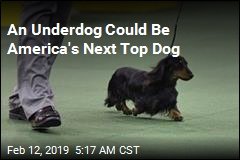 Dachshund Could Be America's Next Top Dog