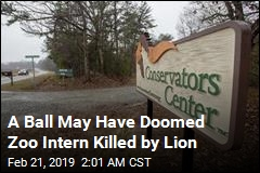Witness Explains How Lion Was Able to Reach, Kill Zoo Intern