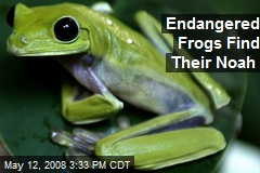Endangered Frogs Find Their Noah