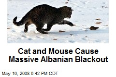 Cat and Mouse Cause Massive Albanian Blackout
