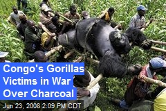 Congo's Gorillas Victims in War Over Charcoal