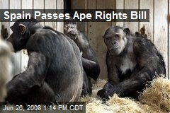 Spain Passes Ape Rights Bill