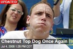 Chestnut Top Dog Once Again