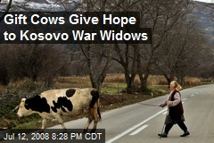 Gift Cows Give Hope to Kosovo War Widows