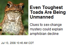 Even Toughest Toads Are Being Unmanned