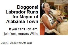 Doggone! Labrador Runs for Mayor of Alabama Town