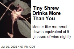 Tiny Shrew Drinks More Than You