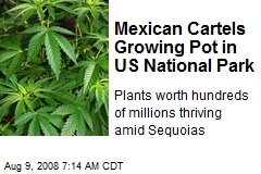 Mexican Cartels Growing Pot in US National Park