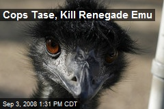 Cops Tase, Kill Renegade Emu