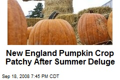 New England Pumpkin Crop Patchy After Summer Deluge
