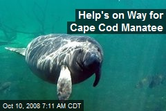 Help's on Way for Cape Cod Manatee