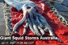 Giant Squid Storms Australia