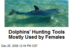 Dolphins' Hunting Tools Mostly Used by Females