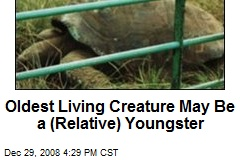 Oldest Living Creature May Be a (Relative) Youngster