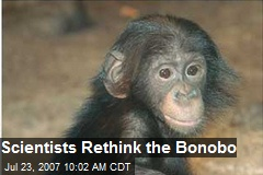 Scientists Rethink the Bonobo