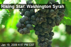 Rising Star: Washington Syrah