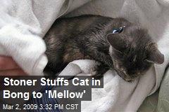 Stoner Stuffs Cat in Bong to 'Mellow'