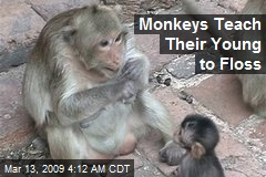 Monkeys Teach Their Young to Floss
