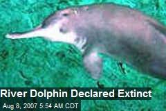 River Dolphin Declared Extinct