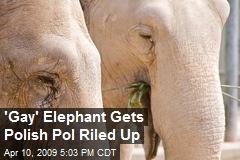 'Gay' Elephant Gets Polish Pol Riled Up