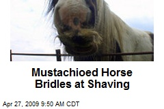 Mustachioed Horse Bridles at Shaving