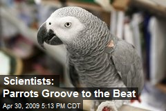 Scientists: Parrots Groove to the Beat