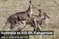 Australia to Kill 6K Kangaroos