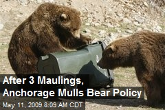 After 3 Maulings, Anchorage Mulls Bear Policy