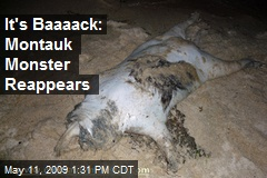 It's Baaaack: Montauk Monster Reappears