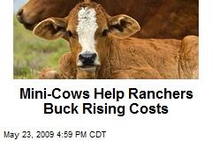 Mini-Cows Help Ranchers Buck Rising Costs