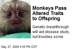 Monkeys Pass Altered Traits to Offspring