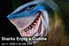 Sharks Enjoy a Cuddle