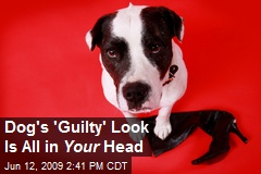 Dog's 'Guilty' Look Is All in Your Head