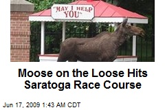 Moose on the Loose Hits Saratoga Race Course