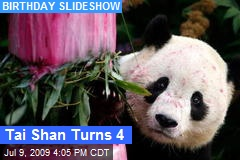 Tai Shan Turns 4